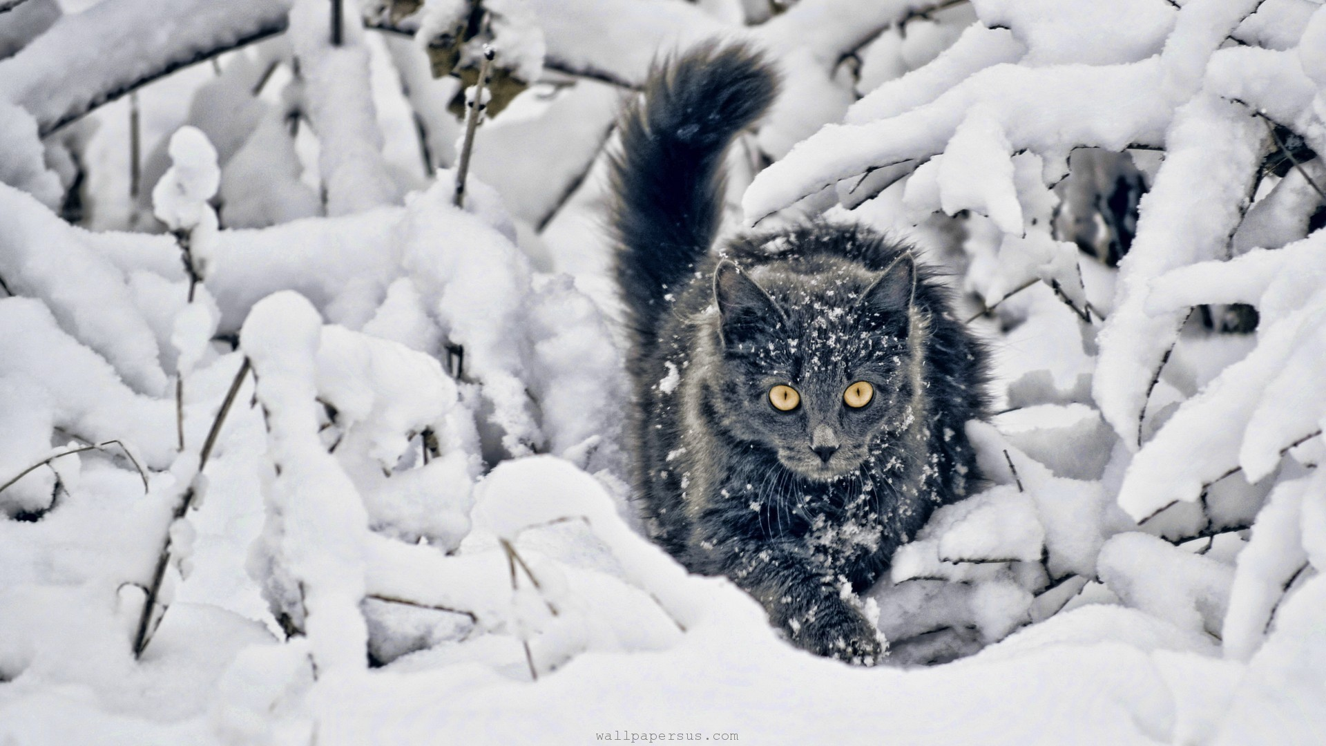 winter-snow-cats-animals-kittens